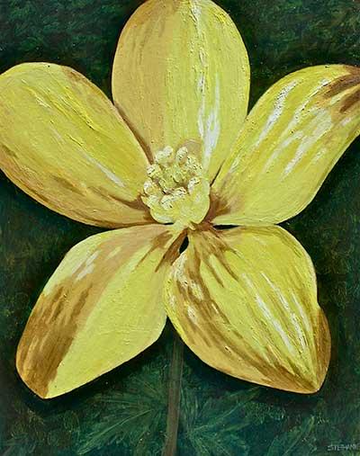 Thick-fruit Buttercup (Ranunculus pachycarpus)